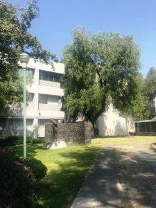 Институт геологии