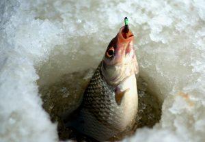 В День дурака сотрудники ТИУ наловят рыбы!
