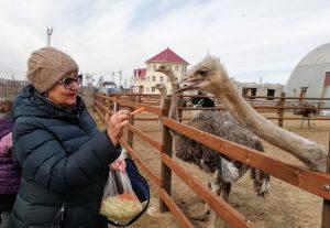Посещение страусиной фермы